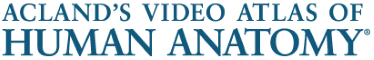 Logo and link to Acland's Video Atlas of Human Anatomy